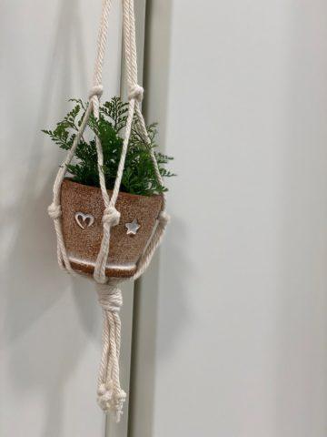 ボディコンフォート店内観葉植物